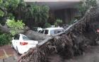 Tin tức mới nhất áp thấp nhiệt đới có khả năng mạnh thành bão số 4 5