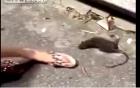 Cô gái la hét đau đớn khi bị chuột tấn công