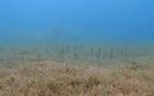 Thú vị ngắm nhìn đàn cá chình đứng uốn lượn dưới đáy biển