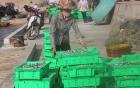 Formosa đã chuyển 3.000 tỷ tiền bồi thường cho ngư dân miền Trung 3