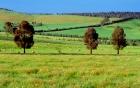 Đại gia Việt chi hàng chục triệu USD mua trang trại tại Australia