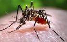 Phát hiện muỗi mang virus Zika tại Việt Nam