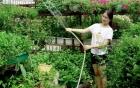 Vườn rau tươi mơn mởn trồng bằng xơ dừa của 8X Sài thành