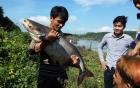 Hàng trăm người đổ xô săn cá