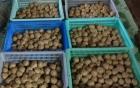 Tiêu hủy hàng trăm kg bò viên làm từ thịt lợn bẩn và phụ gia