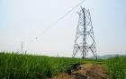 Thiệt mạng vì chặt cây gần hành lang điện cao thế ở Tây Ninh