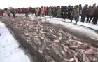 Mẻ lưới 50 tấn cá đánh bắt trên hồ băng của ngư dân Trung Quốc