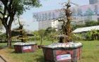 Cặp khế 300 tuổi rao bán giá 12 tỷ ở Sài Gòn