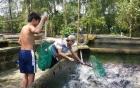 Video: Phóng sinh cả thuyền cá trê ở miền Tây