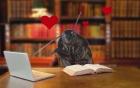 Quà độc Valentine: Chi 40 USD để tặng gián cho người yêu