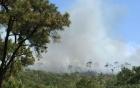 Cháy lớn ở rừng thông đặc dụng tại Quảng Ninh