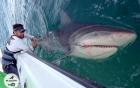 Màn đối đầu nghẹt thở giữa VĐV cử tạ và con cá mập bò khổng lồ