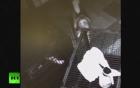 Chó phá chuồng sắt cứu đồng loại khỏi phòng khám thú y