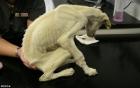 Chú chó bị bỏ rơi và cuộc lột xác ngoạn mục