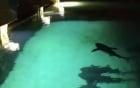 """Thanh niên chọc giận cá mập, bị đuổi """"té khói"""""""