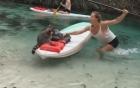 Video: Du khách hốt hoảng vì gấu mèo trèo lên thuyền cướp túi đồ ăn