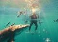 Màn mở hộp siêu phẩm Samsung Galaxy S8 dưới nước cùng cá mập