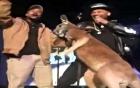 Chuột túi tung quyền tấn công diễn viên trên sân khấu