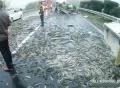 Xe tải lật khiến hơn 1,5 tấn cá