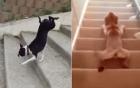 Video: Cận cảnh những cách leo cầu thang