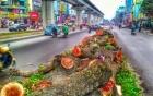 Chủ tịch Hà Nội: Nắng nóng kỷ lục một phần do