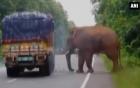 Voi khổng lồ đói quá, chặn xe tải để xin thức ăn