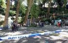 Bồ Đào Nha: Cây sồi 200 tuổi đổ sập gần nhà thờ, ít nhất 12 người tử vong