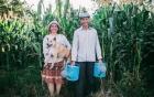"""Câu chuyện xúc động về bộ ảnh cưới """"chăn trâu-mót lúa"""" của đôi vợ chồng Sóc Trăng"""