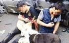Vụ đánh chết trộm chó ở Hà Nội: Có thể bị phạt từ 7 đến 15 năm tù