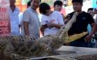 Mua cá sấu qua mạng với giá hơn 5 triệu, người đàn ông nhận được... ảnh cá sấu