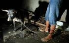 Hình ảnh rùng rợn trong những trang trại thịt chó: Nỗi đau của những chú chó phải chứng kiến cái chết của đồng loại