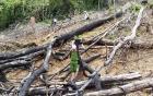 Đề nghị truy tố 2 vợ chồng phá 3,6 ha rừng phòng hộ trong vòng 2 tháng