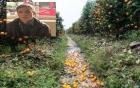 Bắt giữ đối tượng dùng thuốc diệt cỏ phá hoại 400 cây quất cảnh của người dân