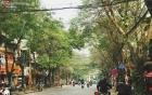 """Trong nhiều năm qua, người Hà Nội đã """"tận dụng"""" những hàng cây xanh như thế nào?"""