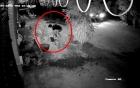 Clip: Hai thanh niên đi ô tô, nhổ trộm hoa hồng nhà người dân lúc rạng sáng