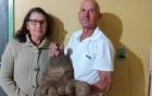 Sửng sốt trước củ khoai tây nặng 8kg, có hình dáng giống hệt bàn chân người