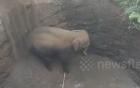 Bị rơi xuống giếng, voi con mừng rỡ khi được giải cứu