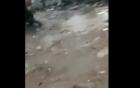 Chuyện lạ: Cơn mưa trút hàng trăm con cá xuống thị trấn
