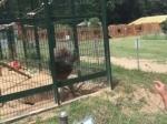 Video: Bị khiêu khích, khỉ giận dữ ném phân vào mặt bé gái