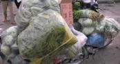 """Hàng trăm kg rau """"bẩn"""" được tuồn vào các trường học"""