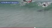 Du khách hoảng hốt phát hiện cá mập bơi ngay dưới ván lướt