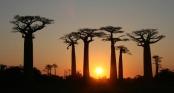 9 khu rừng lạ lùng bí ẩn nhất hành tinh