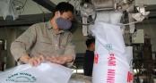 Nhà máy đạm Ninh Bình tái hoạt động sau khoản lỗ 3.100 tỷ