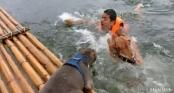 Chủ vờ chết đuối, 2 chú chó thay nhau ra cứu