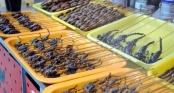 Những món ăn côn trùng kinh dị không phải ai cũng dám thử, đặc sản Việt Nam cũng góp mặt trong đó