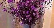 Cẩn trọng với độc tố bên trong hoa đỗ quyên ngủ đông đang gây sốt