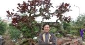 Chiêm ngưỡng cây bàng lá đỏ độc nhất vô nhị của tướng Phan Văn Vĩnh