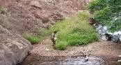 Tiến hành khám nghiệm thi thể nam phượt thủ bị mất tích trong rừng