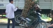 Người đàn ông đeo 130kg dứa trên vai đến bán khiến thương lái không tin vào mắt mình