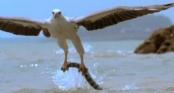 Video: Cận cảnh cuộc chiến tàn khốc giữa chim đại bàng và rắn cực độc